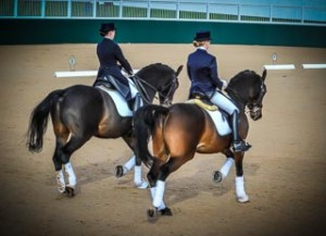 Pair of Dressage horses and riders equestrian photography northampton
